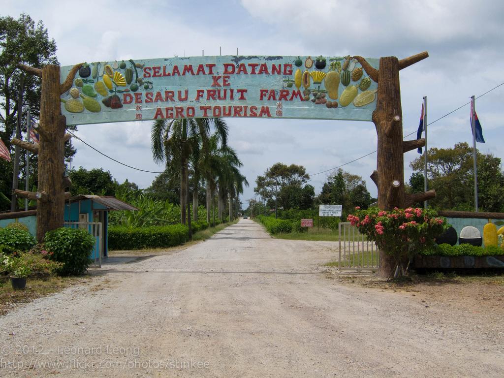 Mengembara ke Desaru Fruit Farm Kota Tinggi