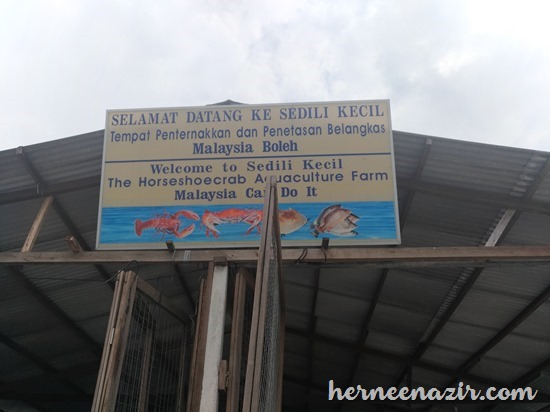 Lawatan Ke Tempat Penternakan & Penetasan Belangkas Sedili Kecil