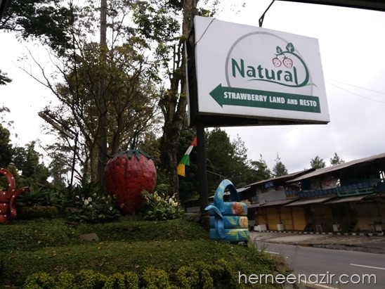 Travelog Bandung | Natural Strawberry Land & Resto