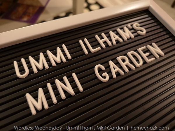 Wordless Wednesday 47 – Ummi Ilham's Mini Garden